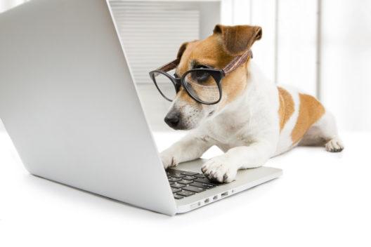 feature post image for Vom Haustier zum Onlinestar - wie Petfluencer die Onlinewelt erobern